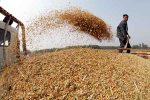 importacion-trigo