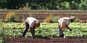 Salud-Agricola-Integral